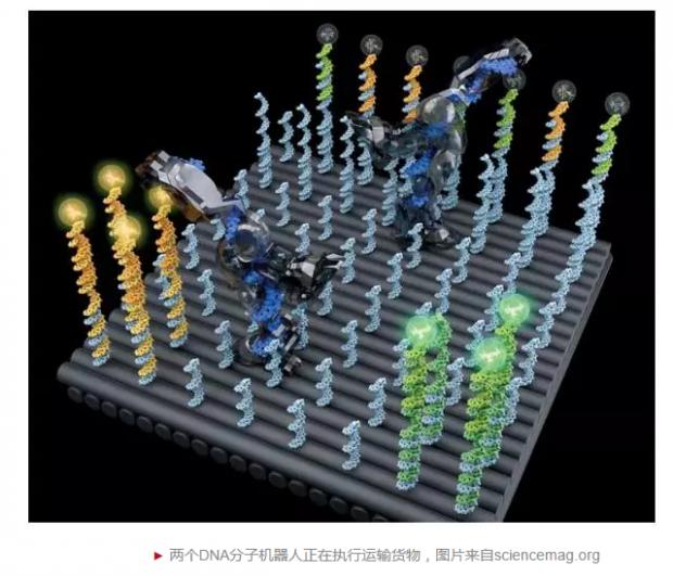 华裔女科学家实现天才的想法:发明全自动DNA分子机器人