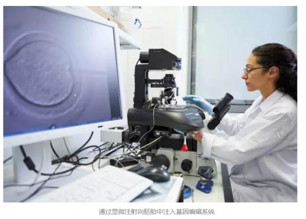 英国人凑热闹:人类生殖细胞基因编辑研究争什么?