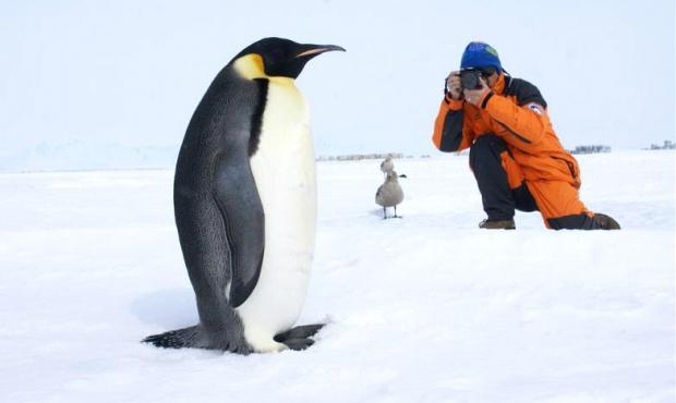 南极旅游:探索世界尽头,请带上责任
