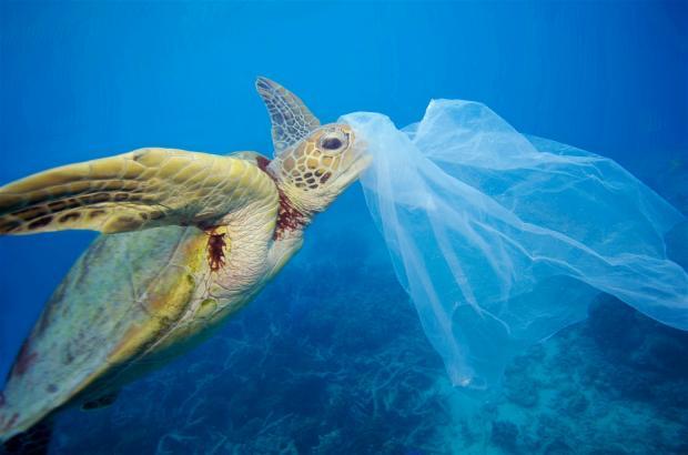 《塑胶海洋》制作人专访:我们有责任讲述事实