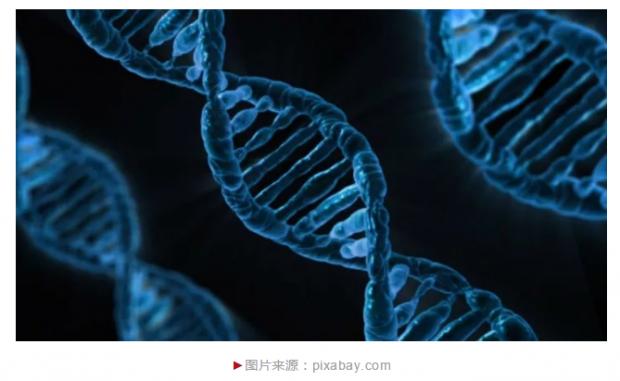 这个基因,或许会让你更聪明