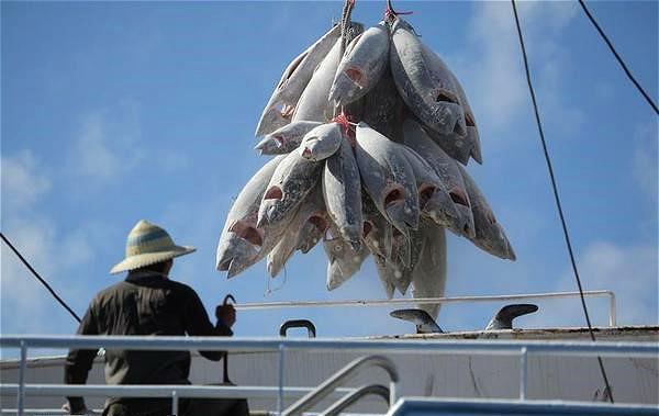 打击非法捕捞须下重手