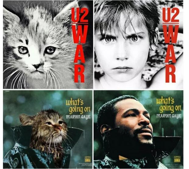 咪咪摇滚——想变成猫的人