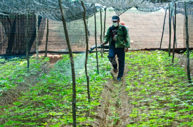中国成立农药管理局应对农药污染和滥用
