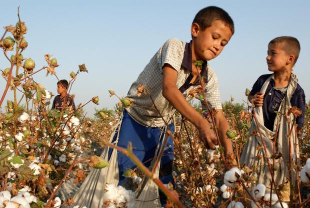 苏联:棉花也腐败