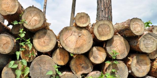 美国宣布禁止从秘鲁公司进口木材,认为存在非法砍伐