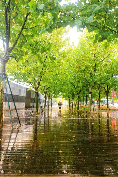 11月上海,秋意正浓