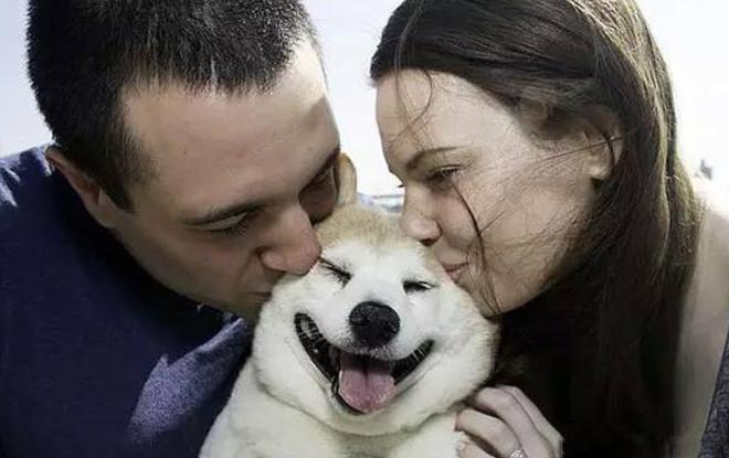 狗会懂你!微笑的人脸对狗有吸引力