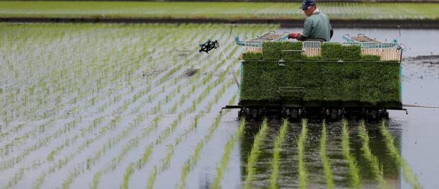 中国培育出了能在海水中生长的水稻