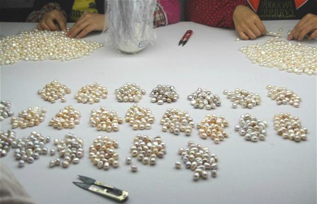 水污染治理重创珍珠养殖户