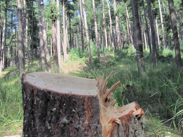植树有学问:中印韩的人工造林经验比较