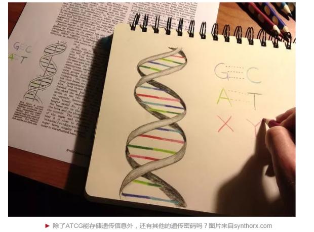 六个遗传密码的人造生命体,翻开合成生命新篇章