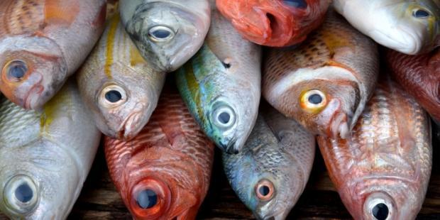 WTO渔业补贴规则:进展和前景