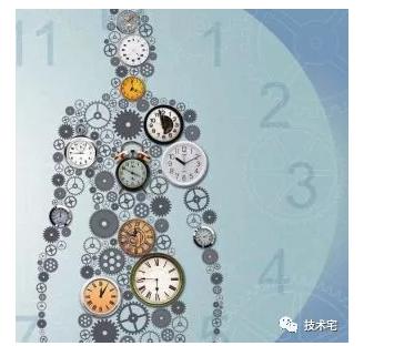 生物钟是谁定的?