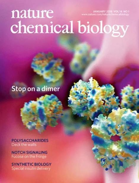 清华学者发现免疫调节新分子,或助力抗炎药物开发