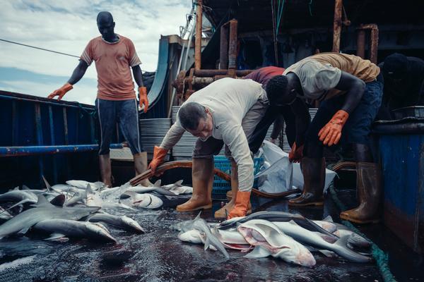 """渔业的""""中国方案""""对环境意味着什么?"""