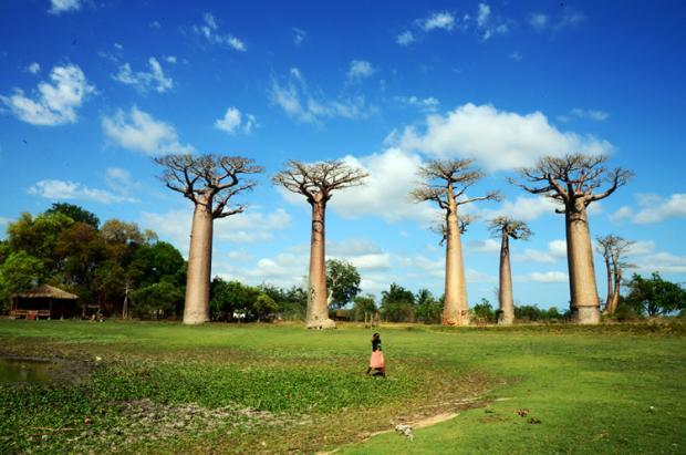 马达加斯加之旅:神奇西海岸