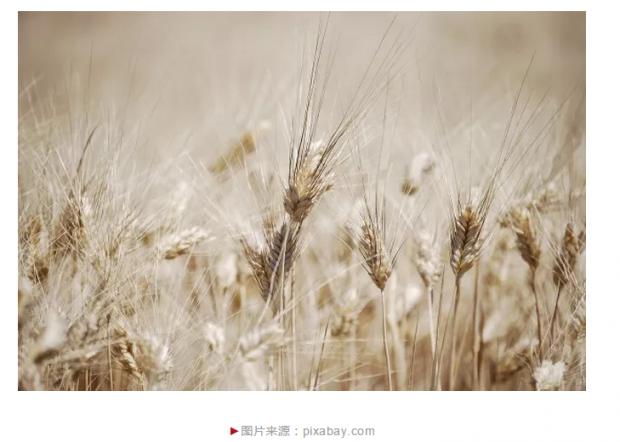 世界最早的农牧业革命从哪里开始?