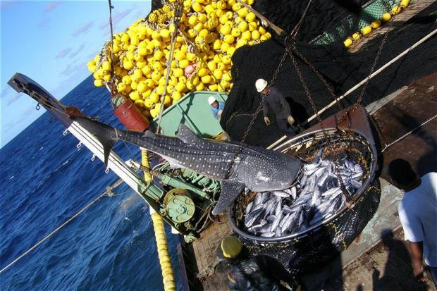 终结渔业补贴:留给世贸组织的时间已经不多了