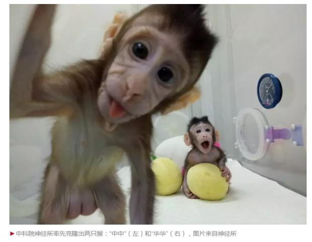 """中国科学家重要突破:克隆猴""""中中""""""""华华""""来了"""