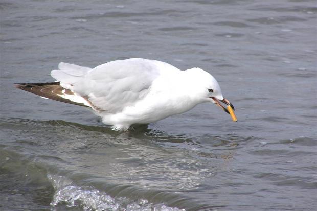 """想要拯救海洋?请远离十种""""隐形微塑料"""""""