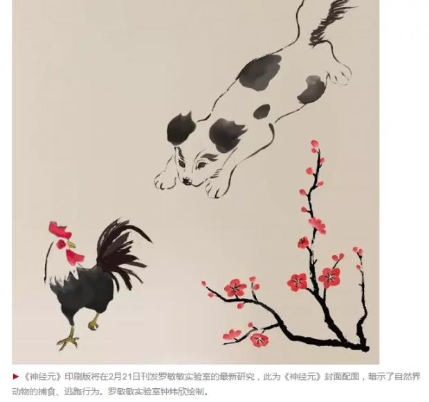 中国学者重磅发现:捕食和逃跑,生死攸关的指令发自同一神经环路