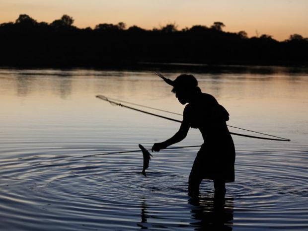 巴西亚马逊雨林:超大型水电站或将成为历史