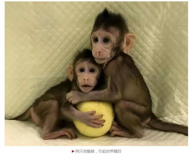 """""""新的里程碑"""":诺奖得主评中国克隆猴研究"""