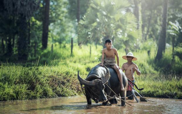 """""""一带一路""""缅甸公路项目:切不可轻视环境风险"""
