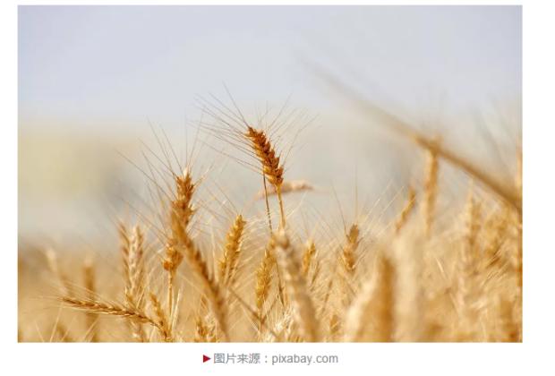 中国食品和农业生产系统正经历历史性变迁