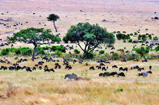 肯尼亚之旅:人与自然的和谐世界