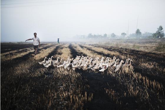 走进越南的化学农业