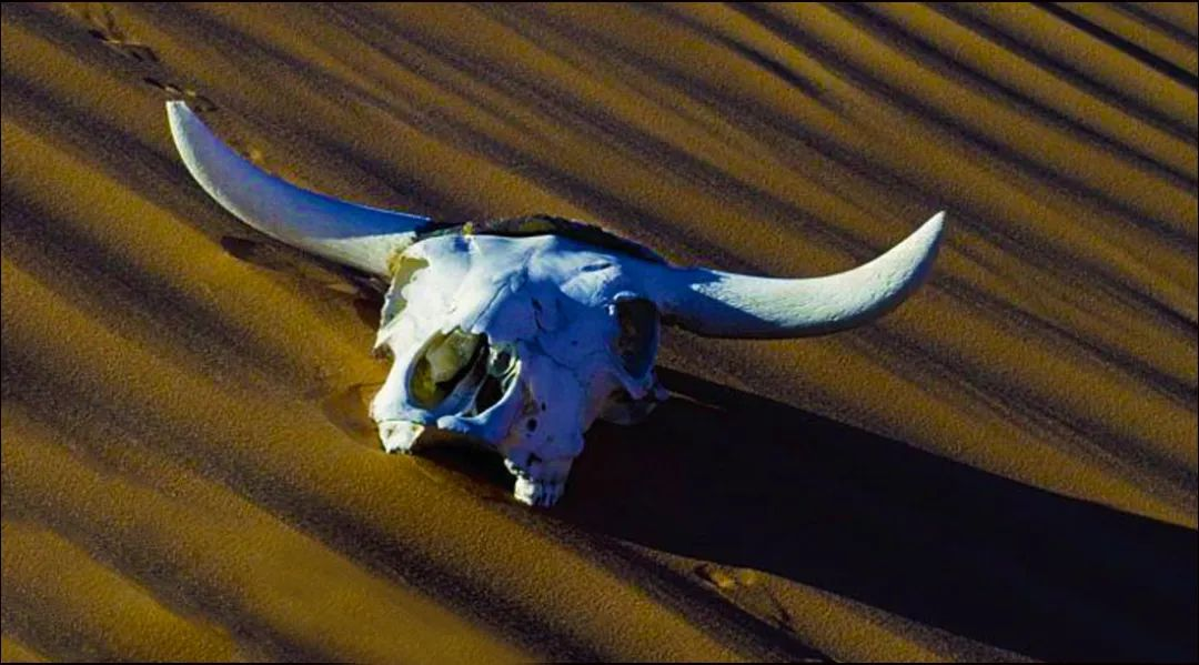 """天山生物意外扭亏:""""死""""掉的牛又""""活""""了?"""