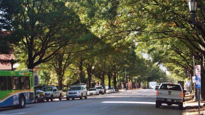 街道旁的行道树会缺水,原来是这原因