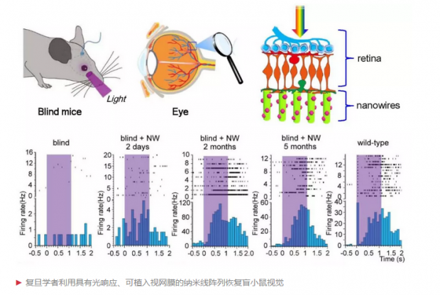新一代纳米感光材料可恢复盲鼠的视觉