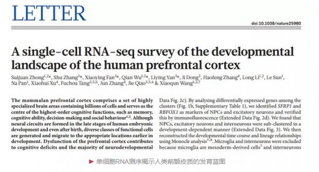 """中国科学家揭示:人脑""""最高司令部""""到底有多少种细胞"""