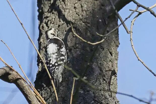 守护水泥森林中的鸟语花香