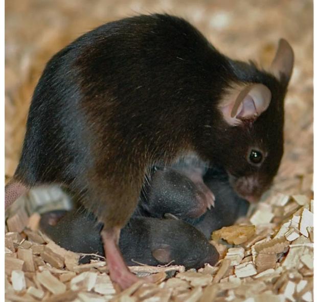 新奇:母爱可改写宝宝大脑基因组?