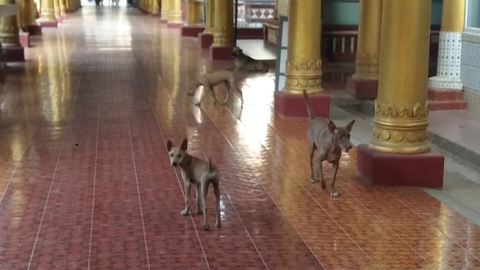 因信仰而安贫乐道的缅甸人