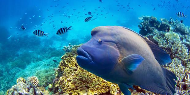 涸礁而渔:香港海鲜贸易背后的潜规则