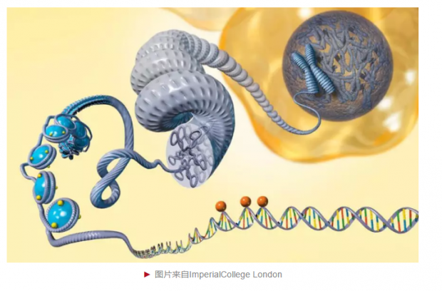 人类早期胚胎染色质调控新机制被发现