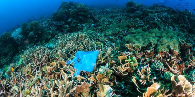 """墨西哥海洋峰会:海洋""""保卫战""""已经打响"""