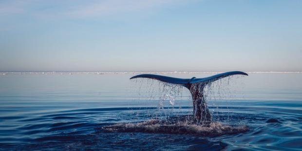 海洋保护需要更完善的保险机制