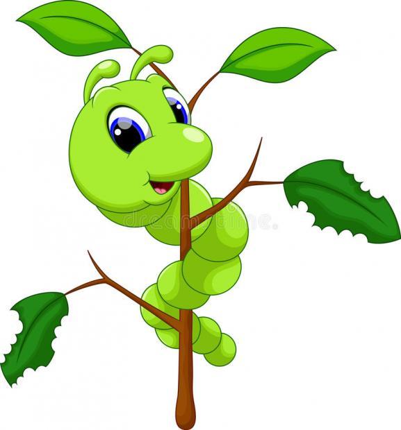 蚕,蚂蚁,和蜜蜂