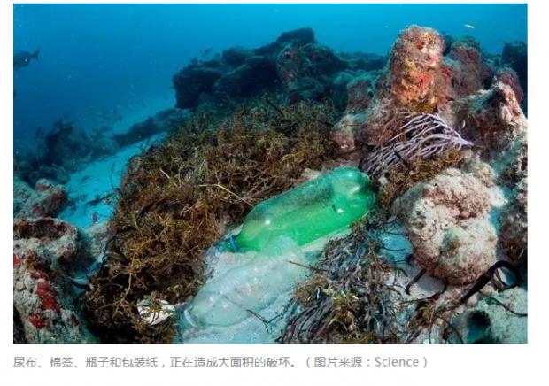 """塑料所到之处,珊瑚""""哀鸿遍野"""""""