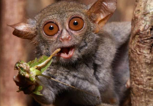 我们从吃虫的祖先那继承了什么样的基因