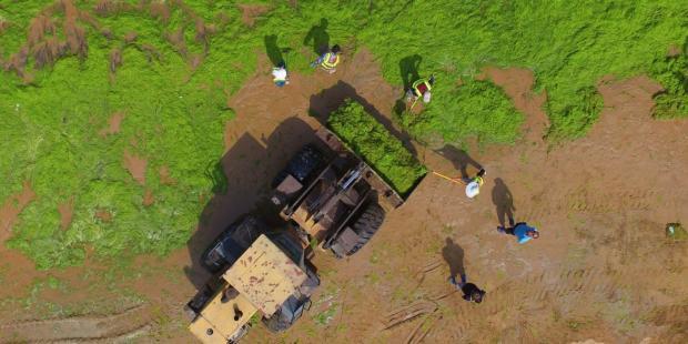 化肥污染:考验地球承受力