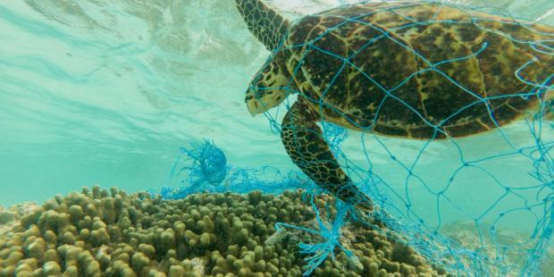 塑料:寻找回收利用的变革