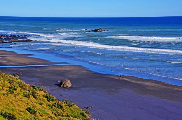 新西兰之旅:黑沙滩与鸟岛