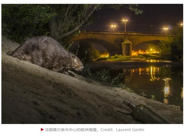 为了躲避人类,野生动物变成了夜猫子